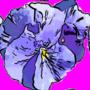 TULIPE & PENSEE 2/3 - GERARD CHANGEUX - Sam'Oz