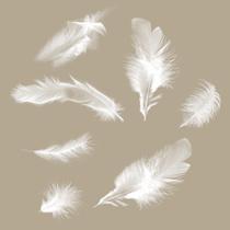Plumes des Anges