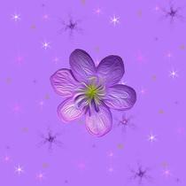 fleur violette fond d'étoiles