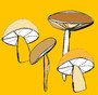 yellow mushrooms - Dobromila Golowacz - Sam'Oz