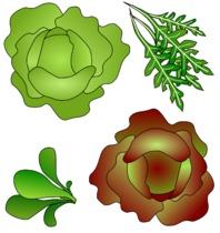 salades de florence