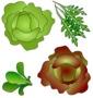 salades de florence - Florence DAVID - Sam'Oz
