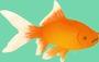 Les petits poissons - Anaïs GRIMAUD - Sam'Oz
