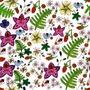 eclosion-du-jardin - Héloïse Bihan-poudec - Sam'Oz