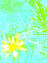 Graphismes Fleur jaune/ Fond bleu